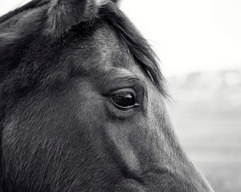 Horse Eye Picture | Close Up Horse Photograph in Black and White
