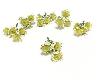 24 YELLOW Acacia Blossoms on Short Stems - Flower Crown, Halo, Woodland Crown, Artificial Flowers, Silk Flowers, Wedding Flowers, Millinery