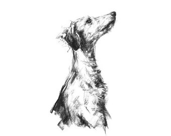 "Lurcher ""Listener"" - fine art dog print"