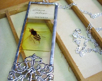 Vintage microscope slide necklace hoverfly insect jewellery biology science