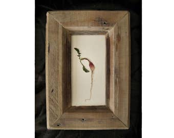 Radish <|> framed in weathered wood