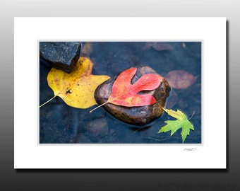 Fall Leaves and River Rocks Small Matted Photography Print, Autumn Themed Wall Art, Red Sassafras, Fits 5x7 inch Frame