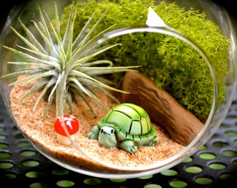Turtle Terrarium Kit ~ Small Glass Terrarium with Air Plant ~ Miniature Turtle ~ Lichen Moss ~ Gift Idea ~ For Him ~ For Her ~ Nature Gift