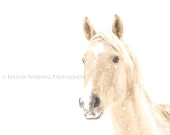 Horse Photos, Horse, Equine Art, Winter, White, Fine Art, Horse in the Snow, Snow