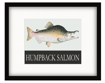 Coastal Décor Humpback Salmon Vintage Style Poster