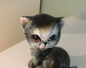 gray cat kitten sitting pretty