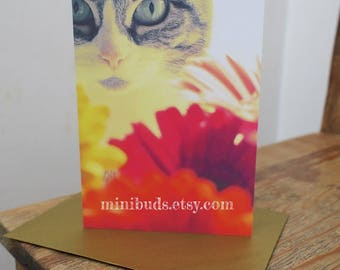 Tabby Cat Card Gerbera Daisy Bouquet photographic art. Birthday, congratulations, good luck, greeting, love. FamilyCat cards by Minibuds