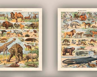 Educational art, Mamals poster, natural science prints, mamal, natural history, whale, elephant, giraffe, kid room decor, school class decor