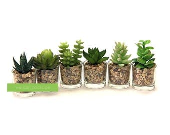 artificial succulents in glass pack of 6 unique wedding favors terrarium home decorations