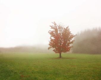 foggy tree print, misty wall art, misty print, foggy trees, maple tree art, Pantone 2017, autumn artwork, autumn landscape art, lone tree