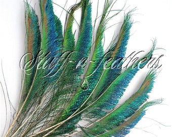 Natural PEACOCK SWORD feathers left side, for millinery, weddings, crafts, decoration, bouquets / 11-14 in (28-36 cm) long, 12 pcs / F93-11