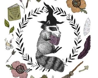 Magic Raccoon Student Print