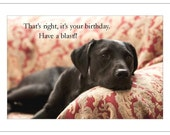 Black Lab Red Couch - Have a Blast
