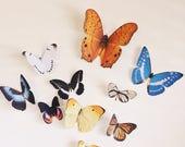 10 hand cut Giant butterflies