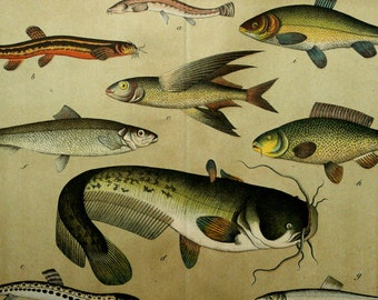 1880 Antique print of FISHES, different species, including Flying Fish. Natural History. Sea Life. 137 years old gorgeous large lithograph.