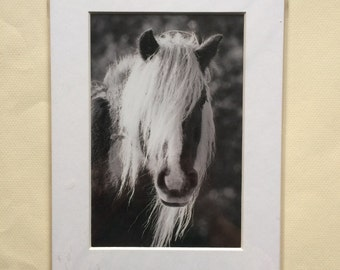 SALE to clear, 7 1/2 x 5 matted prints, matted horse prints, horse prints, horse photography, equine photo, equine art, matted prints, pony