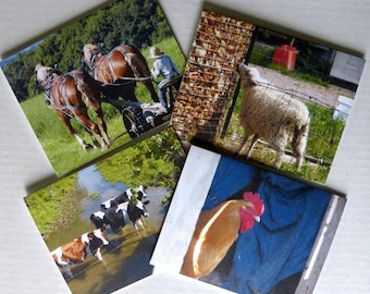 Note Cards, Farm Animals, Greeting Cards, Photos, Wisconsin, Premium Quality, Set of 4 With Envelopes