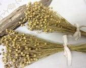 Natural Dried Flax Bunch, dried grains, wedding decor,  wedding bouquet , flax, preserved flax
