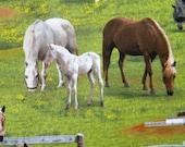custom listing--Farm Animals--fabric by the yard--Elizabeth's Studio, cotton