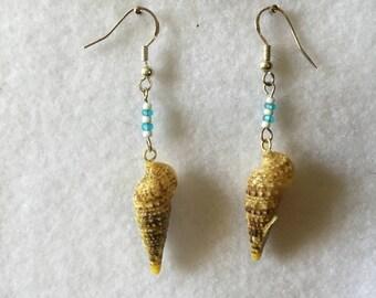 "2.5"" Florida Seashell Dangles"