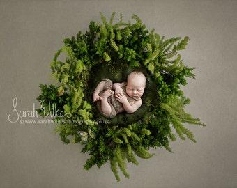Newborn Digital Backdrop -  Fir Nest