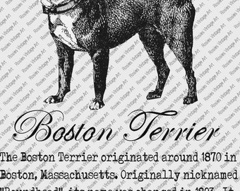 BOSTON TERRIER DOWNLOAD Instant Digital Vintage Art with Description Printable Frame Cards Fabric Transer Iron On