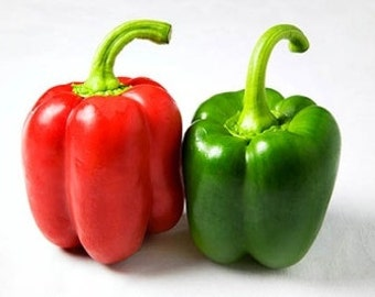 VPPS) YOLO WONDER Pepper~Seeds!!!!~~~Big & Meaty!!!