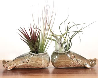 whale vase / whale air plant holder / whale bud vase / smoky grey gold shino whale / one whale