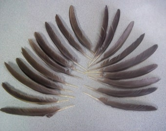 Chicken feathers, 19 feathers, Game Chicken Feathers, Supplies, All natural, No dyes, Free roam, Floral accents, Smudging, Masks & Costumes