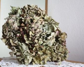 13 dried-Hydrangea-Flowers-purple cream antique  Crafts Bouquets, weddings, couronne de fleurs séchées,rustic dried flower bouquet