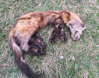 Mountable marten pelt