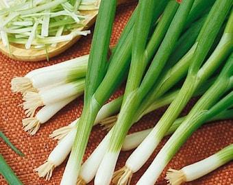 Onion- White Bunching (Scallion) -500 seeds