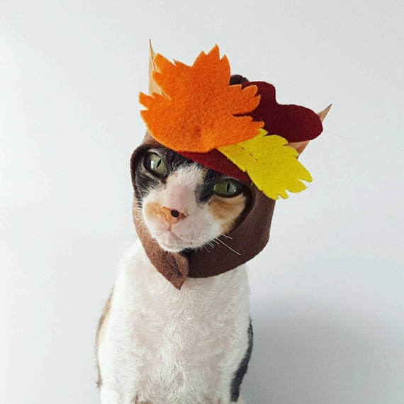 thanksgiving cat costume fall leaves
