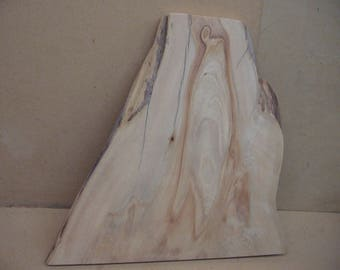 Cypress knee slice with great color and shape