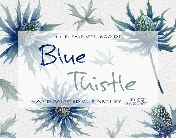 Watercolor Thistle Clipart Blue Eryngium Flower Clip Art Leaf Leaves Illustration Vector Wedding Invitation Rustic Country Wild Flowers