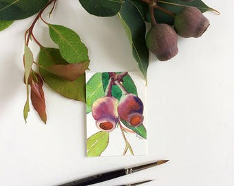 Artist Trading Card: Gum nuts original ACEO painting - original watercolour painting of Australian flora from Australian artist