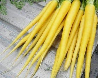 Carrot Solar Yellow Vegetable Seeds (Daucus carota) 50+Seeds