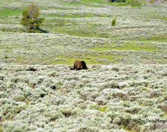 Grizzly and Two Cubs Greeting Card