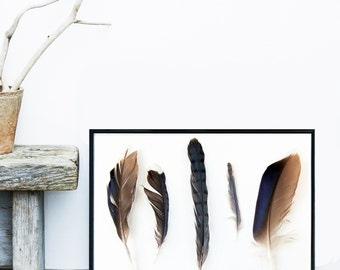 Feather Art, Printable Art, Feather Print, 5 Feathers, Scandinavian Design, Feather Wall Art,  Wall Decor, Instant download, Poster