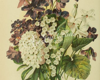 flowers-32263 - Double English Violet, Large Single Purple Violet, Single White Violet, Candytuft, iberis, Lily of the Valley, convallaria