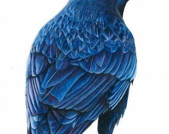 Midnight Crow Art Print