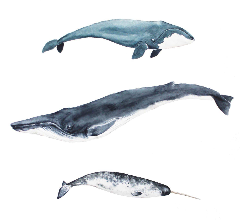 Uncategorized Blue Whale Pictures To Print whales whale art print watercolor decor ocean blue