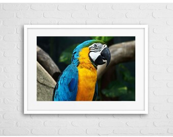 Macaw Parrot Art Photo With frame