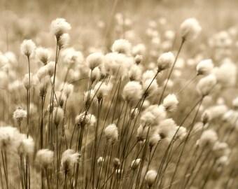 Moor wind