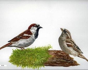Fine art painting, watercolor, birds, torque House Sparrows