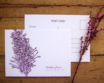 Hello Australia Postcards - Grevillea