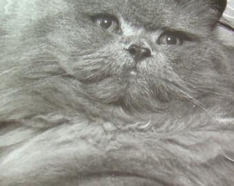 SALE Vintage RPPC of a Grey Cat