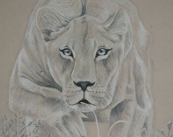 Drawing lioness