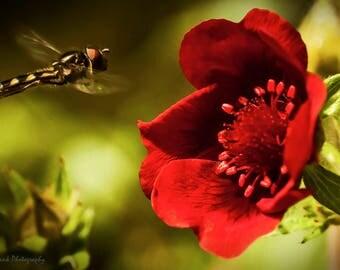 hover flower