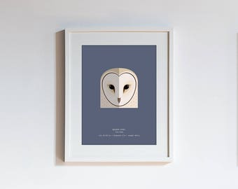 Owl Species Print - choose one of 15 species - modern minimalist illustrated wall art taxonomy series